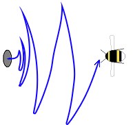 Orienting flight pattern in bumblebees